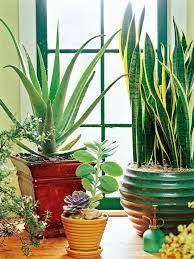 Indoor Plants Low Light Hgtv by Houseplants Guide Indoor Plants Low Light Houseplant And Hgtv