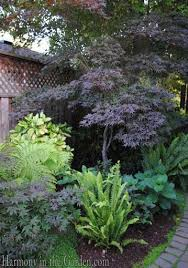 best 25 shade loving shrubs ideas on pinterest shade loving