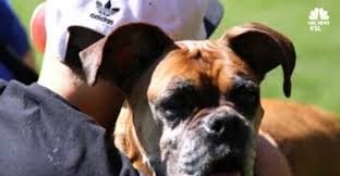 boxer dog kills man oklahoma animal rescue worker run over by man illegally dumping