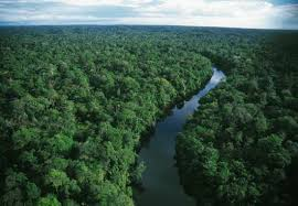 amazon basin amazon rainforest lungs of our planet