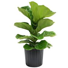 Home Interior Plants by Indoor Plants Garden Plants U0026 Flowers The Home Depot