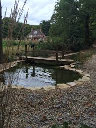 uk native pond plants koi pond construction pond stars uk ltd ditch to dream