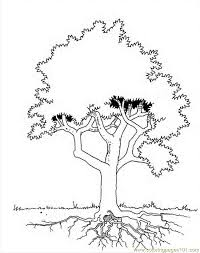 family tree coloring pages coloring pages parts of a tree google twit tree diagram coloring