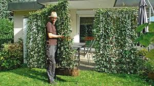 pflanzen als sichtschutz fã r balkon hecke als meterware blickdichte hecke in nur einem tag