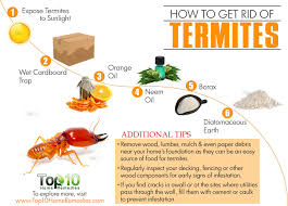 How To Kill Bed Bugs At Home How To Get Rid Of Termites Top 10 Home Remedies