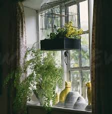 image yellow flowers in birdcage hanging above window with