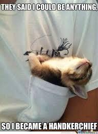 Meme Kitty - handkerchief kitty meme slapcaption com m e m e s pinterest