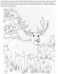 28 color deer images coloring books