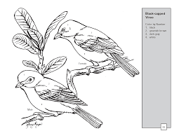 realistic bird coloring pages texas vireo bird color by number