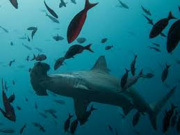 global finprint survey to see how many sharks are in the ocean