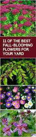 best 25 fall flower gardens ideas on pinterest fall garden