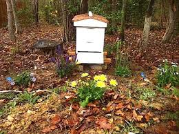 The Backyard Beekeeper Mini Farming On 1 3 Acre In The Suburbs Just Another Day In Paradise