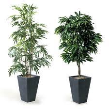 plante verte benelux office