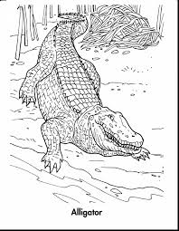 alligator coloring pages printable coloring pages
