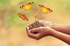 of boy and plant with flying common tiger butterfly