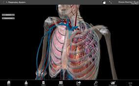 3d Human Anatomy Atlas Human Anatomy Atlas 3d Anatomical Model Of The Human Body