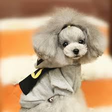 boxer puppy halloween costumes compare prices on halloween costumes dogs online shopping buy low