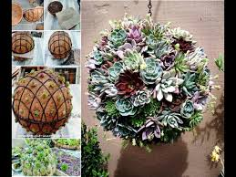succulent sphere wild thyme pinterest gardens plants and