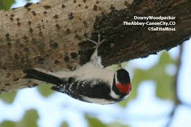 the great backyard bird count is coming feb 17 20 2012 birds and
