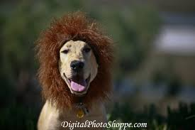 lion dogs how to make your own dog costume puppy in
