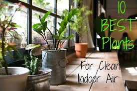 home interior plants top 10 house plants for clean indoor air the healthy home economist
