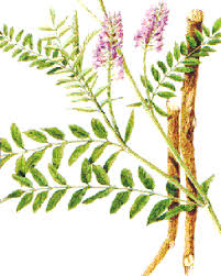 Liste de plantes pour les soins Images?q=tbn:ANd9GcRwDJPaLcTZJa_zQ0QrlQEc1U2TK19P2-ekR0Lo_a20EqLLBAoKhqxdi2cDRw
