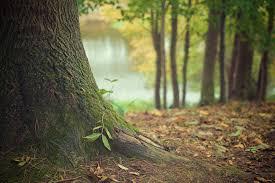 tree boise s premier tree service