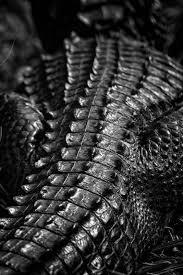 black 黒 kuro nero noir preto ebony sable onyx