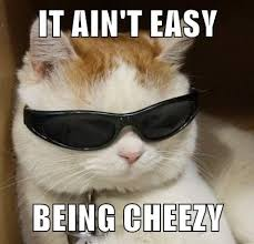 Silly Cat Memes - it ain t easy being cheezy lolcats lol cat memes funny