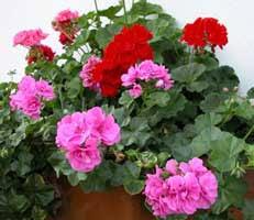 Glosario y propiedades mágicas de las plantas Images?q=tbn:ANd9GcRwDiuySsmua--HKBFZhpA6oDv7PT4O9kkVENFfoiG957KSpjLqpA