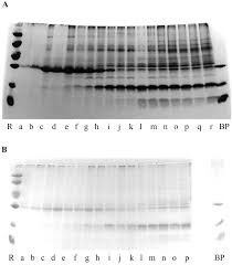 the abundant class iii chitinase homolog in young developing