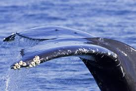 whale watching jamie u0027s whaling station