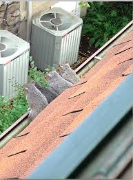 squirrels in the attic how to coexist