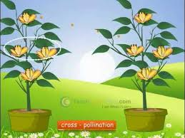 Reproduction In Flowering Plants - cbse science class 7 demo reproduction in plants sexual