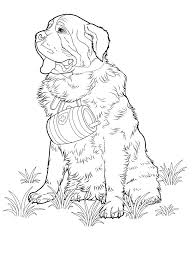 coloring pages chihuahua puppies chihuahua coloring pages chihuahua coloring page chihuahua coloring