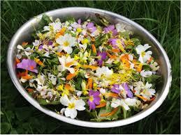 cuisiner les herbes sauvages stage cueillette et cuisine de plantes sauvages stage atelier