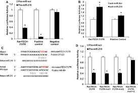microrna 210 decreases heme levels by targeting ferrochelatase in