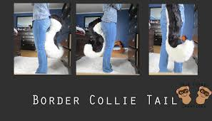 Border Collie Meme - border collie tail commission weasyl