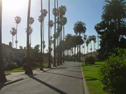 southern california u0027s famous palm trees are dying u2022 alliance for