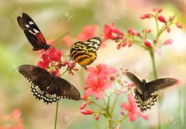 butterfly flowers beautiful tropical butterflies on a flowers stock photo