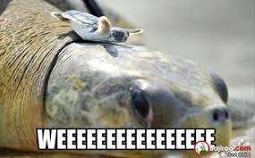 Turtle Meme - turtle meme city