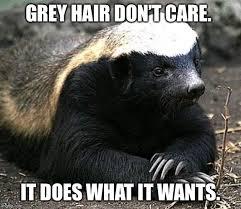 Badger Memes - honey badger memes imgflip