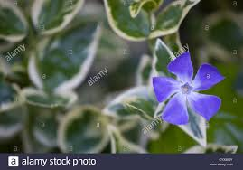 common purple garden flowers with concept picture 61372 quamoc