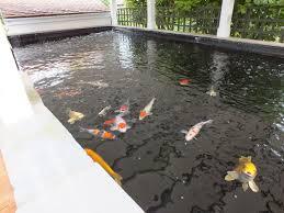 indoor koi pond stunning superior small indoor koi pond with