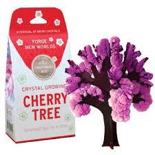 growing cherry tree copernicus toys