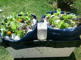 Vegetable Container Garden by The Simplest Self Watering Container Garden For Vegetables Or Even