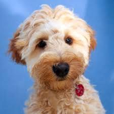 house dogs dog day care u0026 dog grooming in papamoa for tauranga te puke and