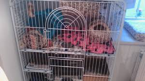 Large Ferret Cage Ferret Cage Review Tour U0026 Litter Box Tips Youtube