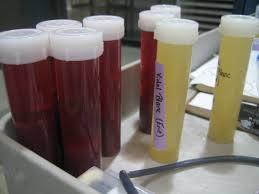 malolactic fermentation wine u0026 grapes u