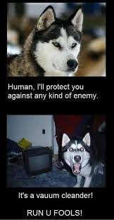 Funny Husky Memes - pin by rebekah garcia on laughs pinterest funny animal